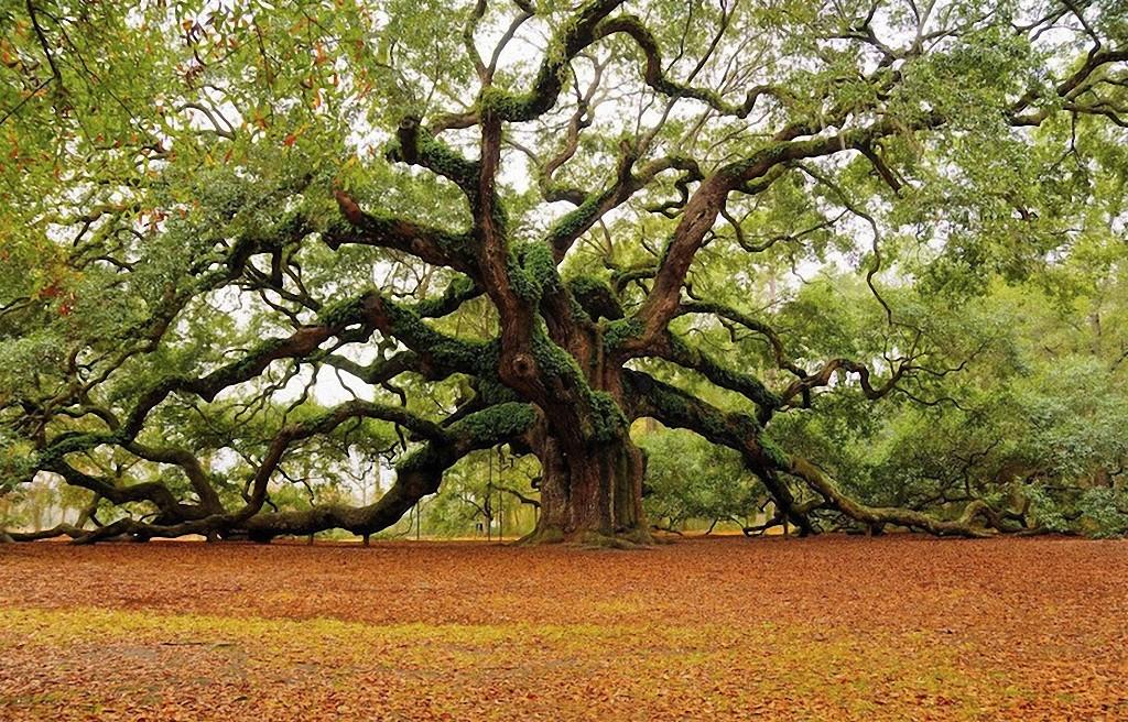 trees15 Самые красивые деревья в мире