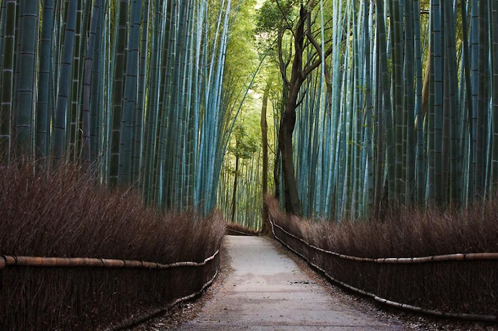 trees16 Самые красивые деревья в мире