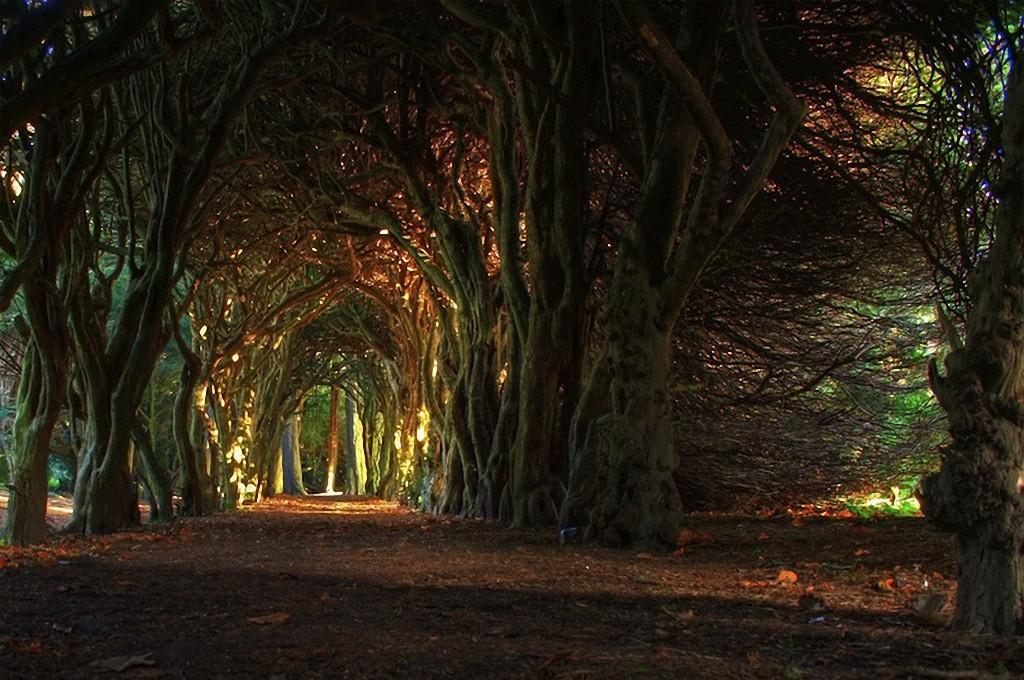 trees17 Самые красивые деревья в мире