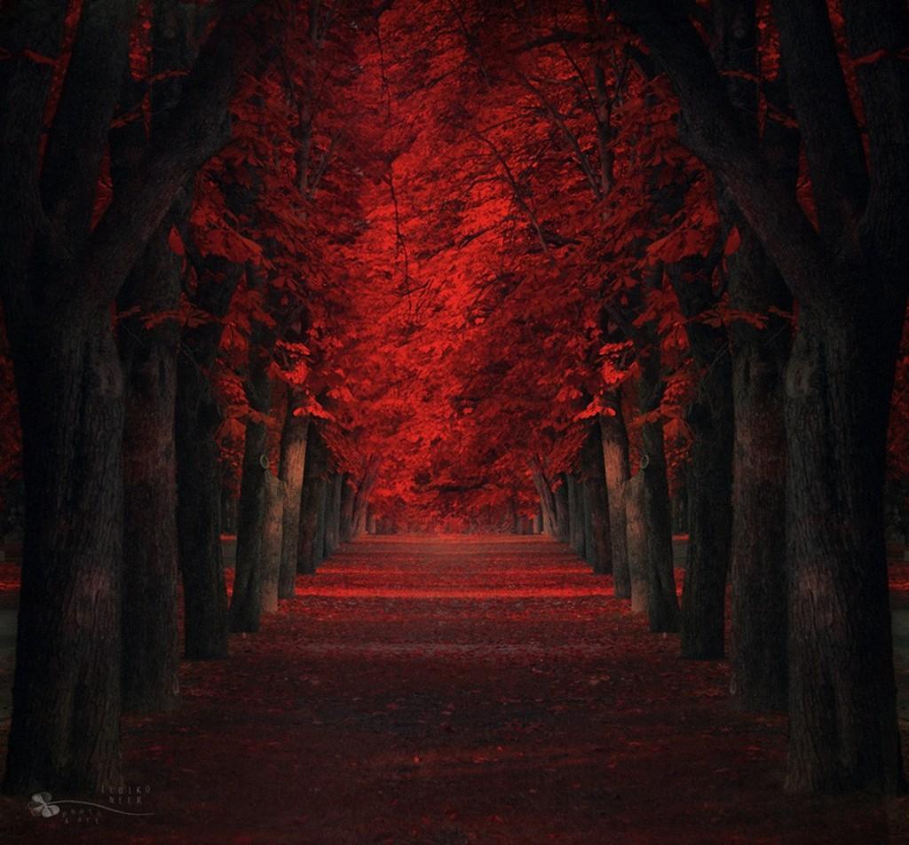 trees18 Самые красивые деревья в мире