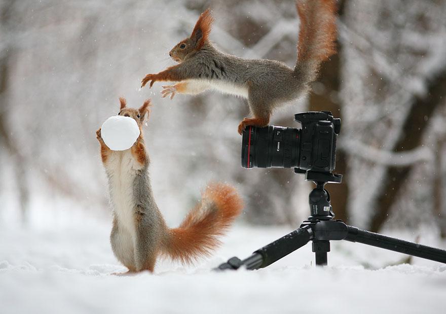 trunov02 Милая фотосессия играющих белок от фотографа Вадима Трунова