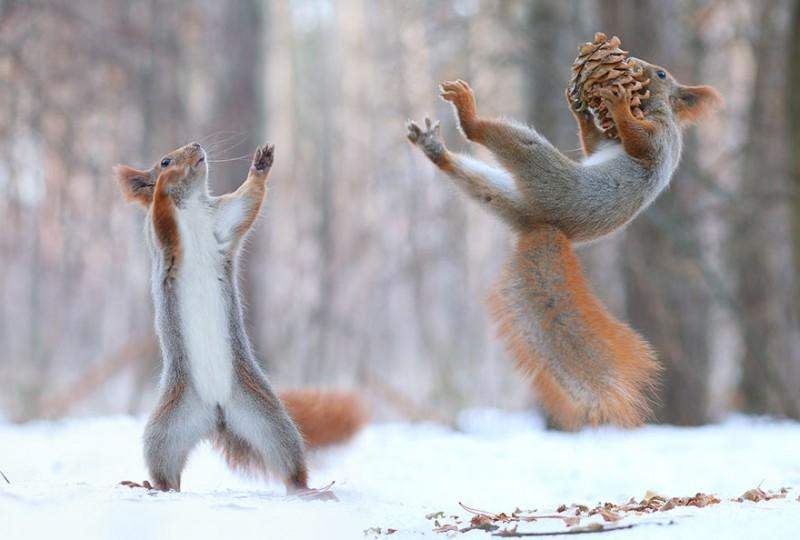 trunov05 800x540 Милая фотосессия играющих белок от фотографа Вадима Трунова