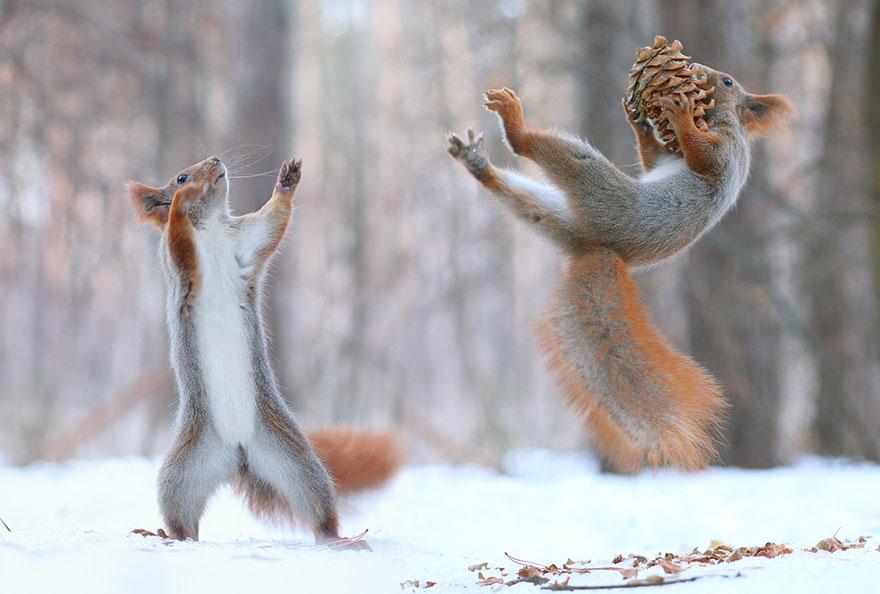 trunov05 Милая фотосессия играющих белок от фотографа Вадима Трунова