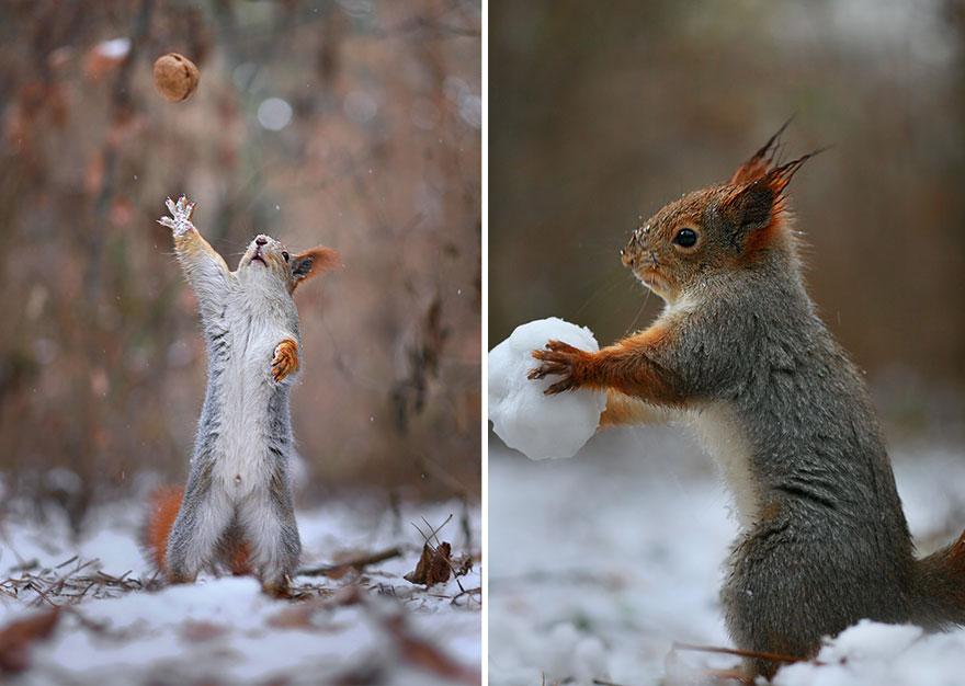 trunov08 Милая фотосессия играющих белок от фотографа Вадима Трунова
