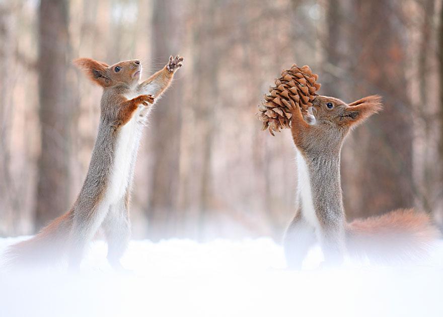 trunov11 Милая фотосессия играющих белок от фотографа Вадима Трунова