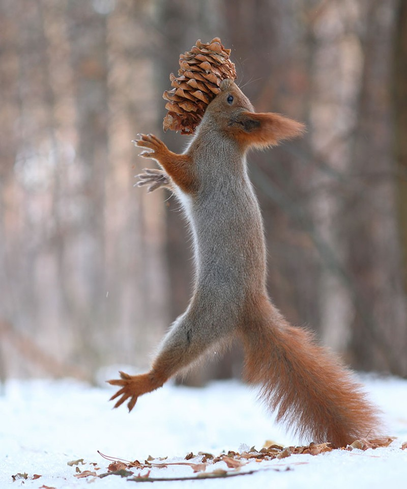 trunov14 Милая фотосессия играющих белок от фотографа Вадима Трунова