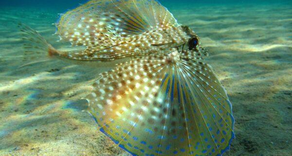 Пришельцы из иных миров: рейтинг самых странных морских существ