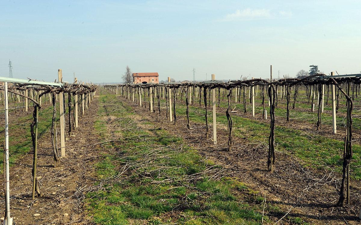 29DSC 8261 Эмилия Романья: вино, салями и автомобили