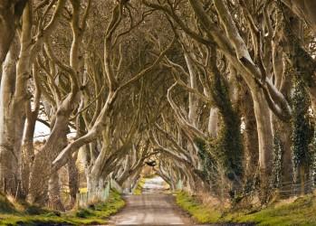 5. Северная Ирландия. Антрим. «Темная изгородь». (Eelco)