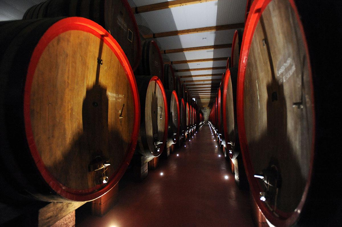 58DSC 8487 Эмилия Романья: вино, салями и автомобили