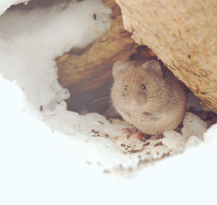 7 of the most cute animals from the island of Hokkaido