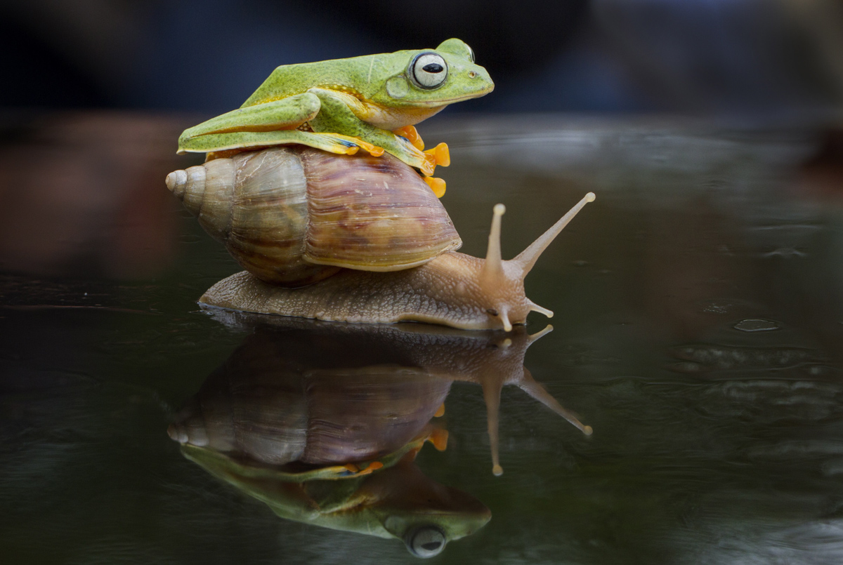 Девушка препарирует лягушку фото