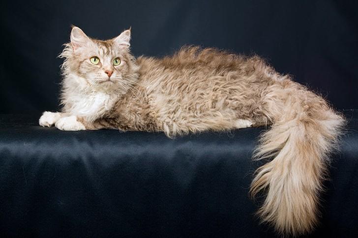 bestcats01 10 самых правильных пород кошек