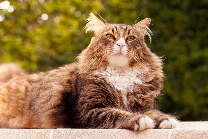 bestcats04 10 самых правильных пород кошек