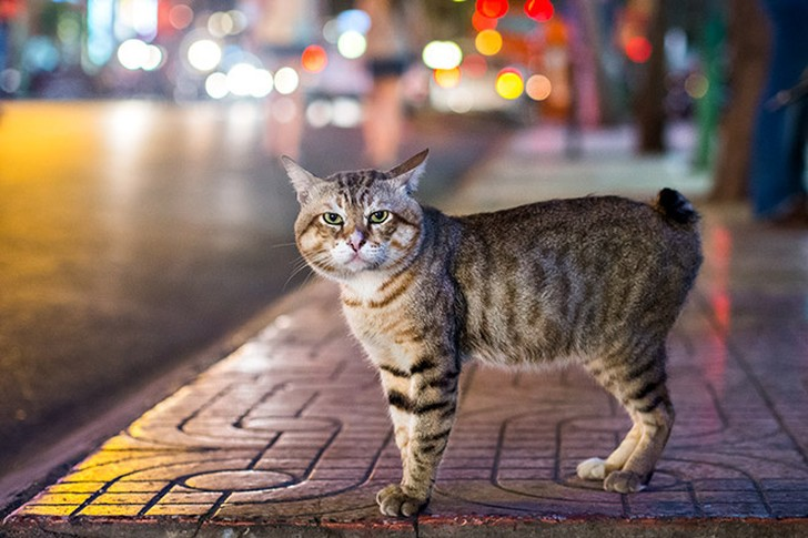 bestcats05 10 самых правильных пород кошек