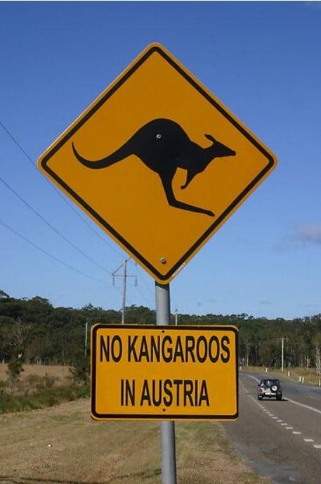 кенгуру в австрии нет фото