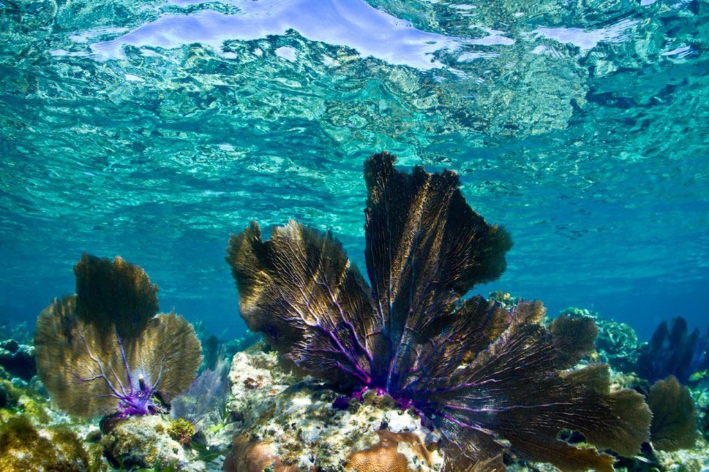 cleanwater09 35 уникальных мест планеты, которые удивят кристально чистой водой