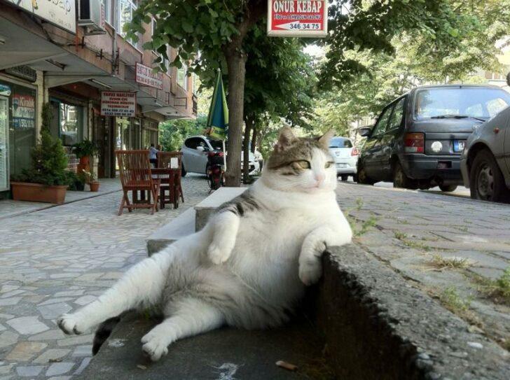 День кота на Бигпикче