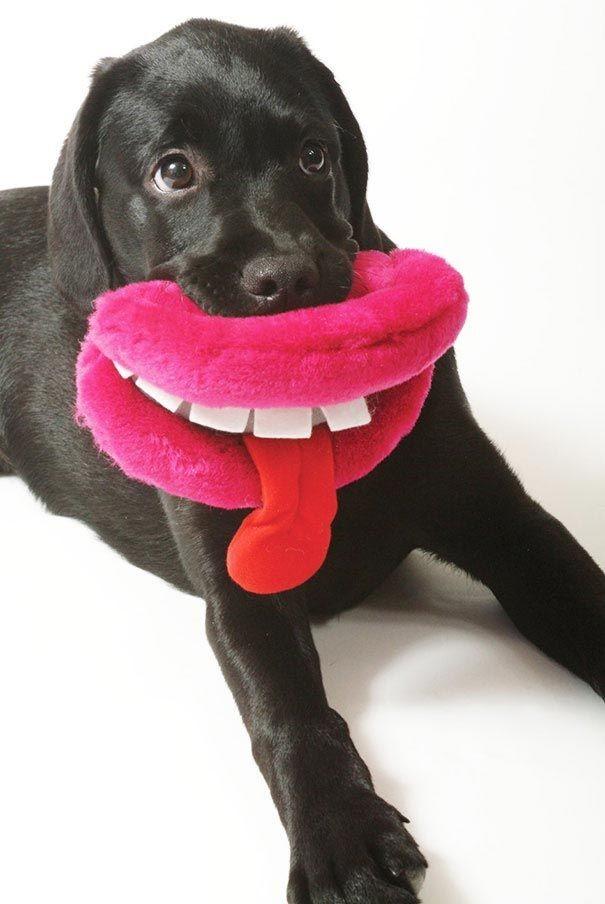 почему у собаки сильный запах из пасти