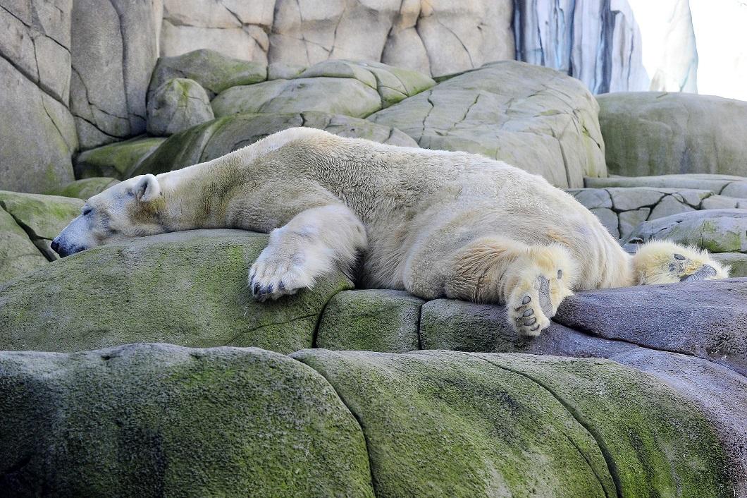 нам картинки отдыхающий медведь овцеводстве