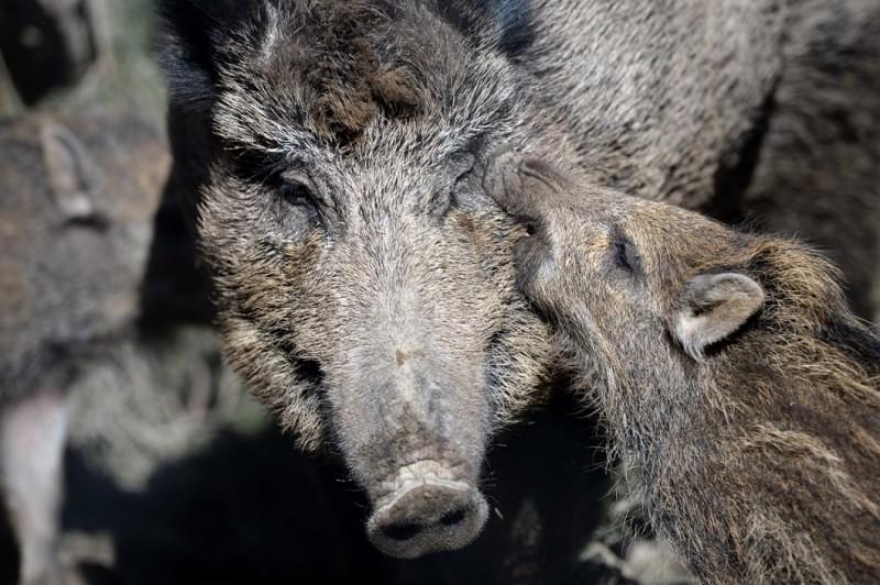постепенно лучшие фотографии животных со скотобоен уже