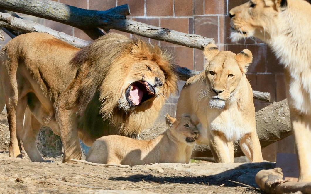 luchshie fotografii zhivotnyh 7 15 marta 20 Лучшие фотографии животных со всего мира за неделю