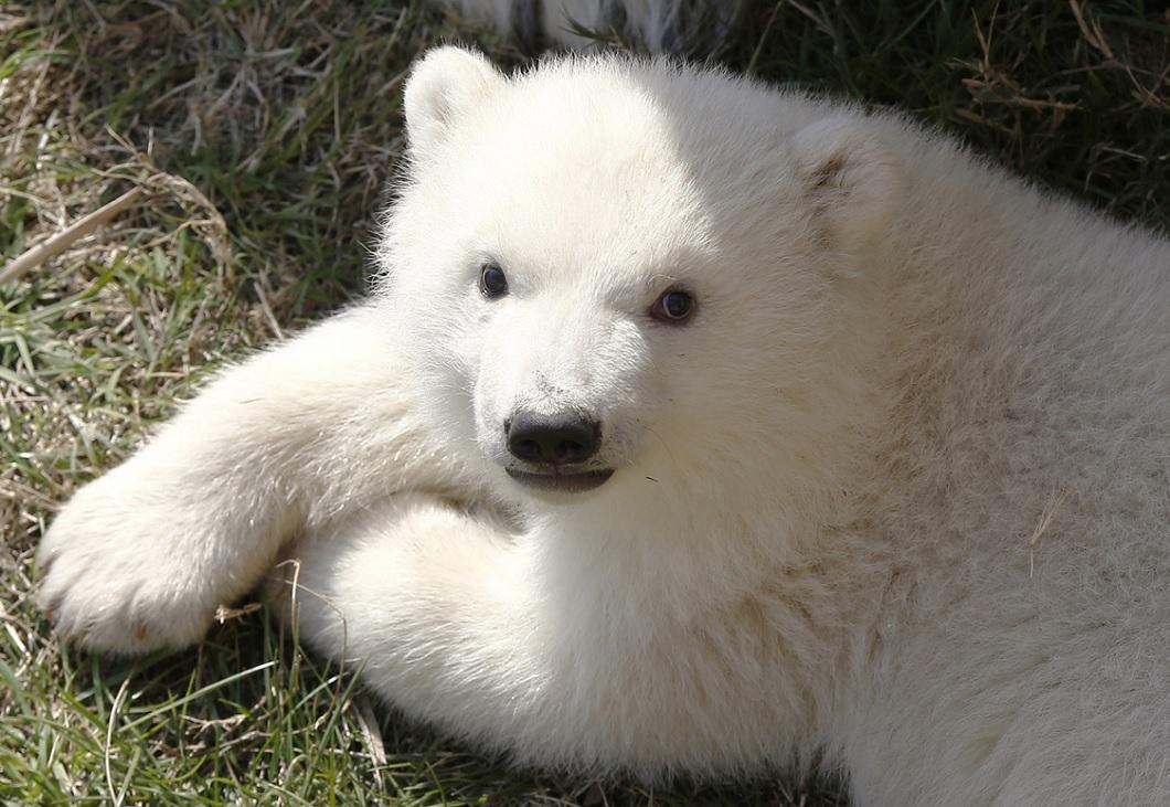 luchshie fotografii zhivotnyh 7 15 marta 21 Лучшие фотографии животных со всего мира за неделю