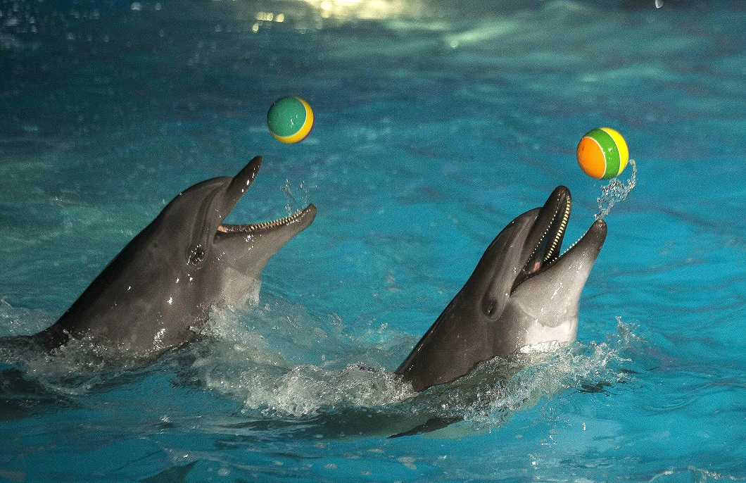 дарим вам дельфин все картинки аттестат, девушка