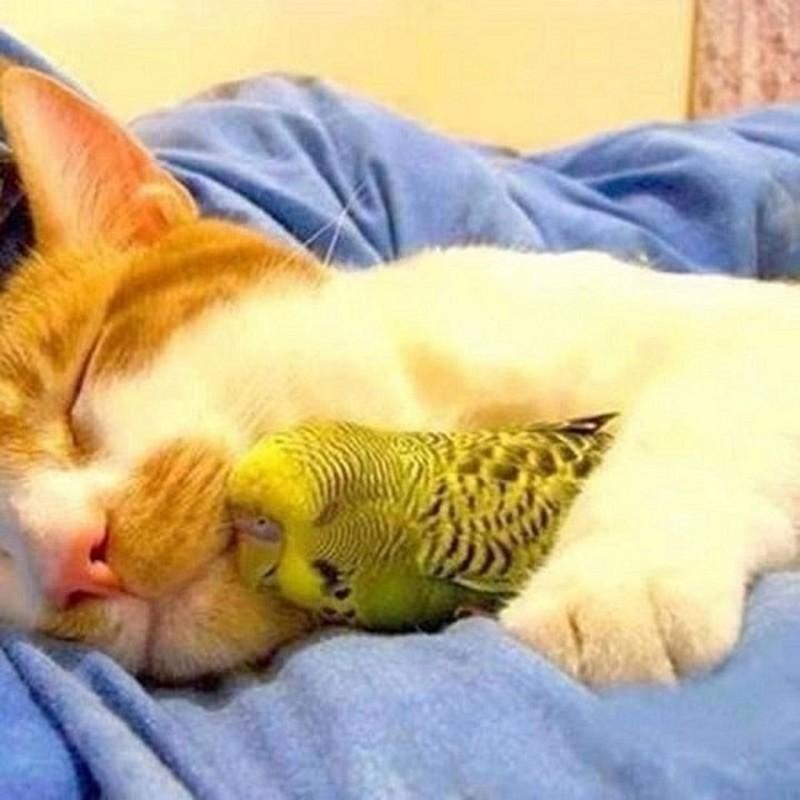 можно ли фотографировать спящее животное сказал один