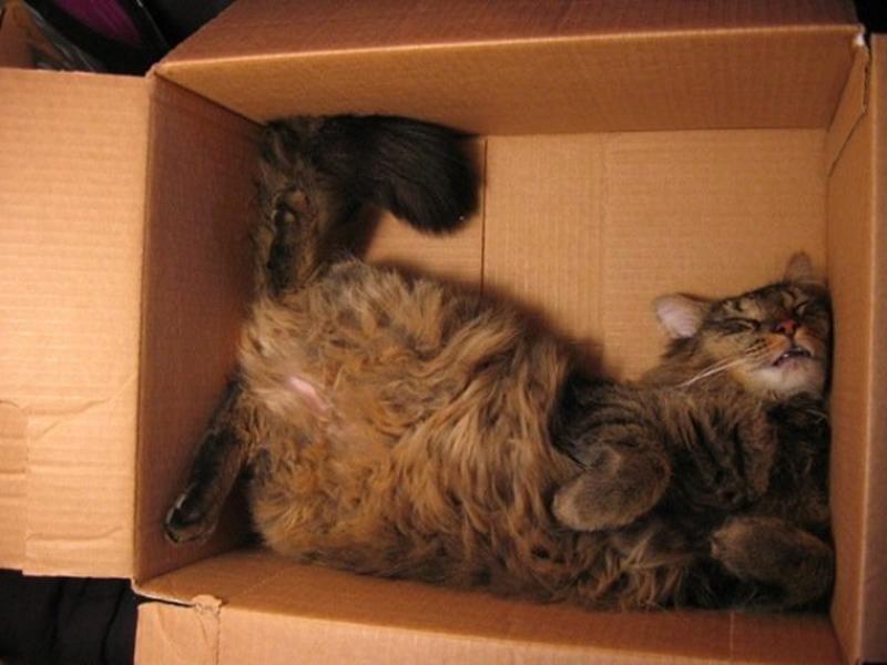 sleepingcats01 Коты, познавшие науку сна