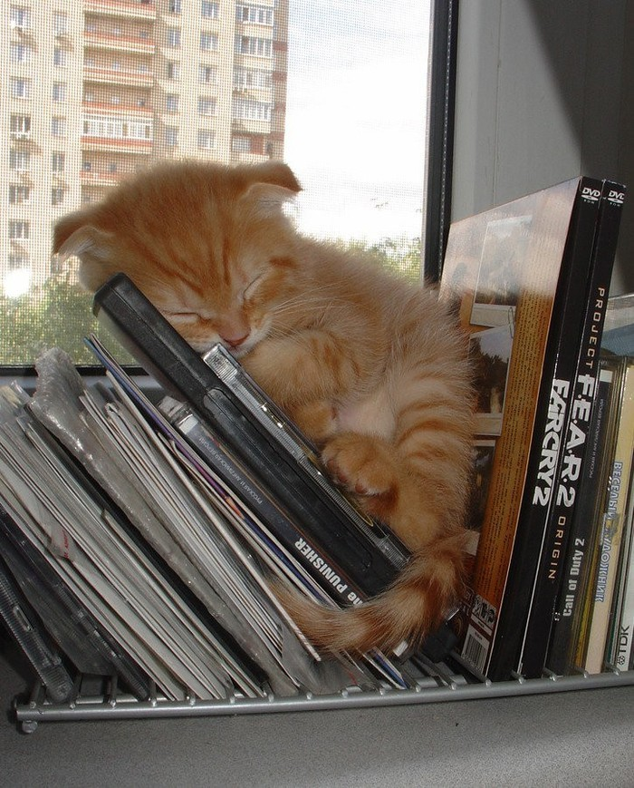 sleepingcats02 Коты, познавшие науку сна