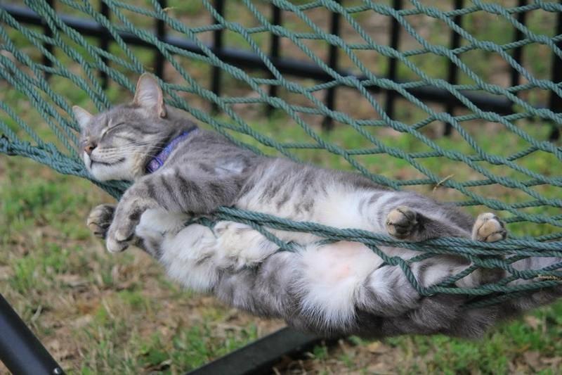 sleepingcats06 Коты, познавшие науку сна