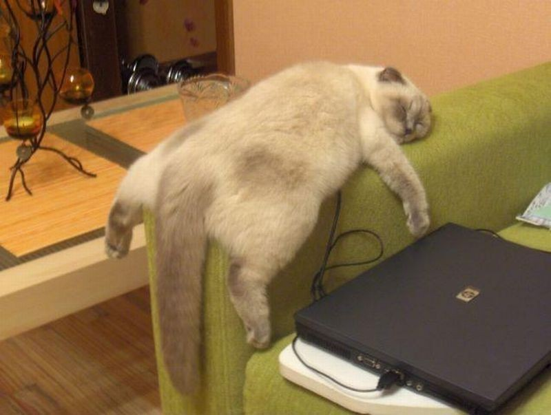 sleepingcats12 Коты, познавшие науку сна