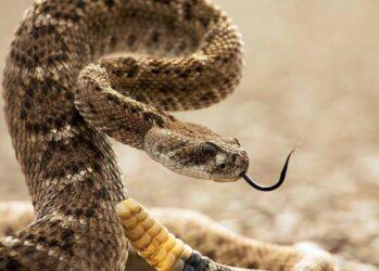 snakemyth03