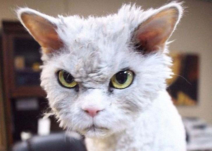 Картинки по запросу кот со злобными глазами фото