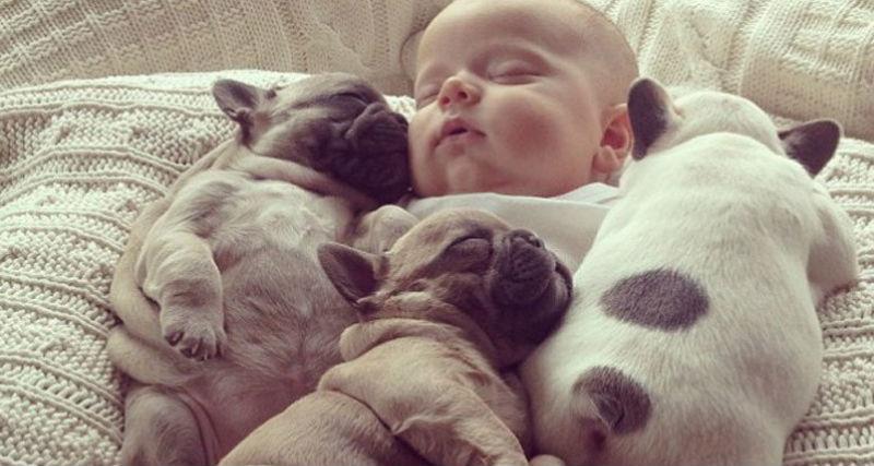 BulldogPuppies03-797x800