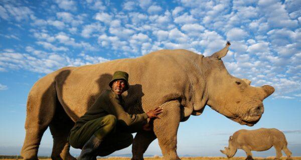 Последний носорог на планете