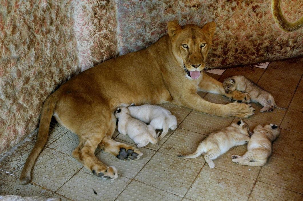 полночь приемные семьи животных фото французском являются одними