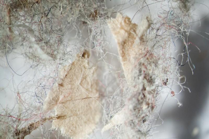 домашняя пыль под микроскопом фото
