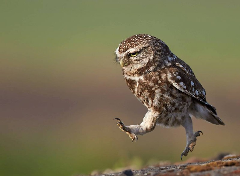 It's 100 most valuable photos of owls of all times and peoples