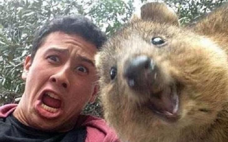 Quokka Selfie Is Cutest Trend