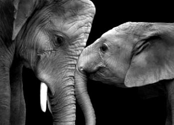 Elephant_min
