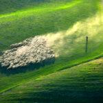 Потрясающая фотоохота на овец в Тоскане