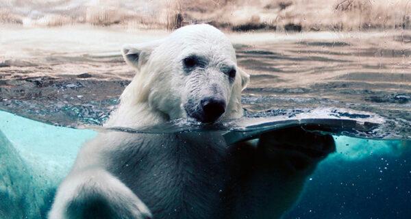 Русское освоение Арктики: как Россия стала на 3 миллиона квадратных километров больше