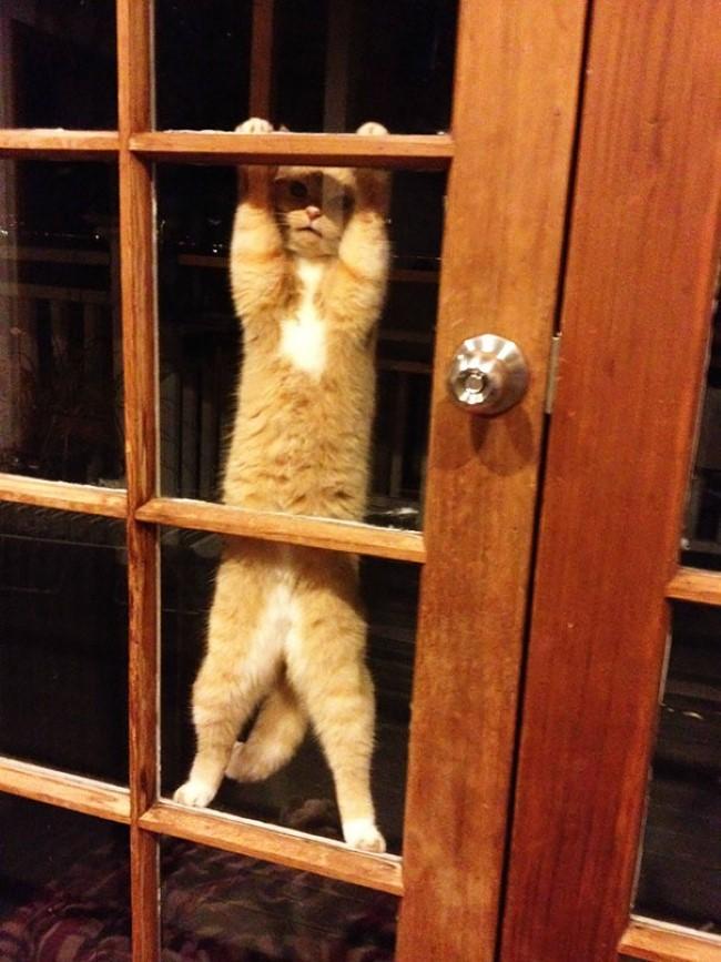 Веселые картинки про двери
