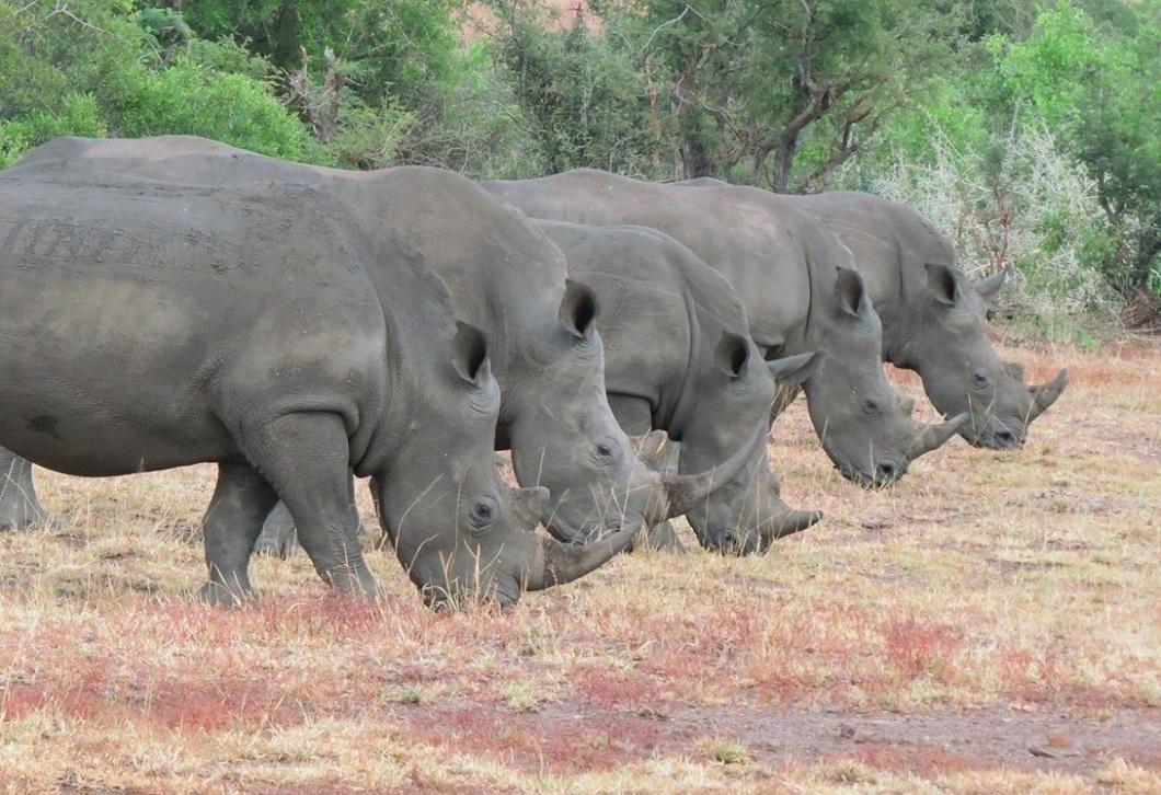 Носорогов фото 4