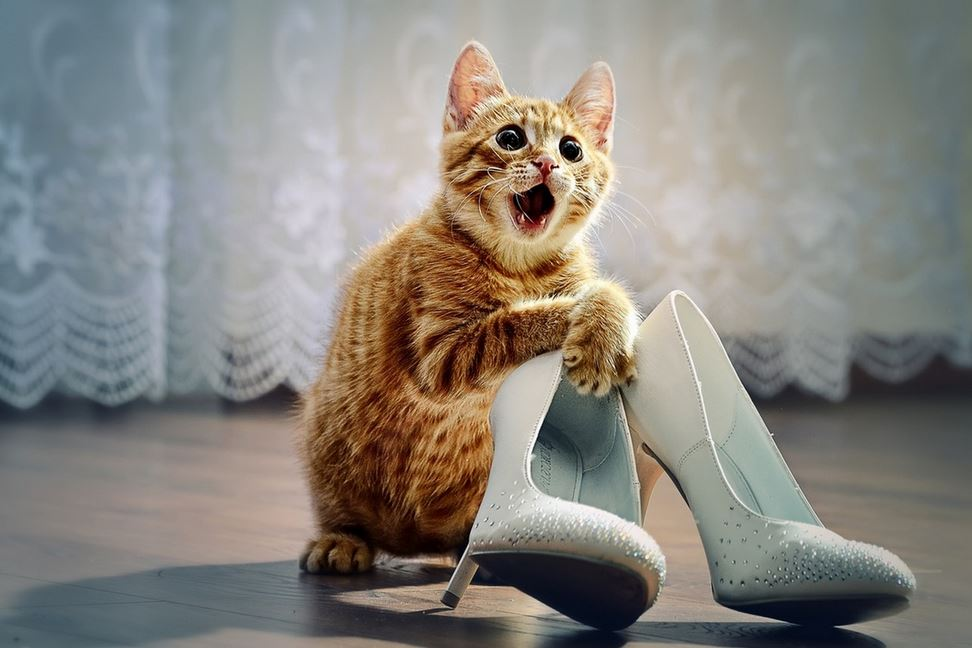 30 причин обменять жену на кошку