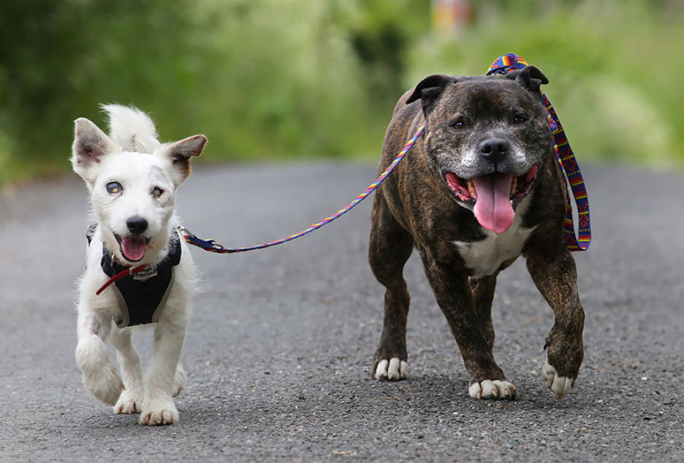blind-dog-guide-best-friends-abandoned-rescued-stray-aid-shelter-glenn-buzz-1