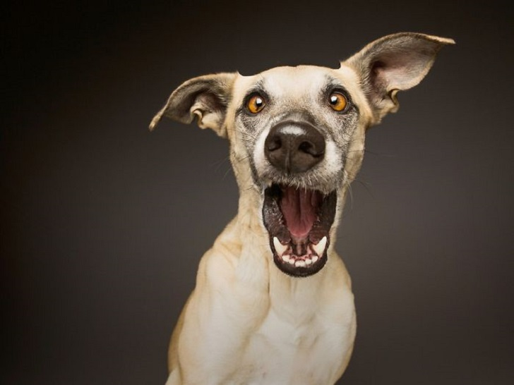 The most expressive dogs in the world of authorship Elke Vogelsang