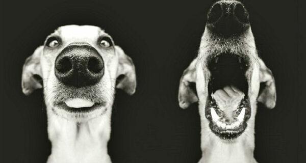 Самые экспрессивные собаки на свете авторства Эльке Вогельсланг
